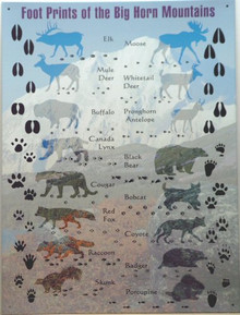 Photo of ANIMAL TRACKS, UNIQUE SIGN SHOWING THE DIFFERENCE IN DIFFERENT ANIMAL TRACKS, GREAT FOR ANY OUTDOORS PERSON