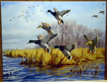 Photo of DUCKS UNLIMITED SIGN,  GOOD AS HOME SHOWS MALLARDS GETTING READY TO LAND IN THE WATER, GREAT COLOR AND SUPER DETAIL