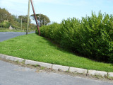 100 Green Privet Hedging Plants Ligustrum Hedge 25-35cm,Dense Evergreen,Big Pots