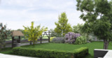 10 Common Box / Buxus Sempervirens, 30-40cm Hedging Plants, Evergreen