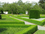 100 Common Box / Buxus Sempervirens, 30-40cm Hedging Plants, Evergreen