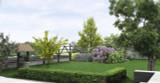 15 Common Box / Buxus Sempervirens, 30-40cm Hedging Plants, Evergreen