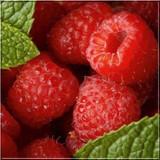 3 'Malling Promise' Red Raspberry Bushes / Cane, Rubus Idaeus 'Malling Promise' in 12cm Pot