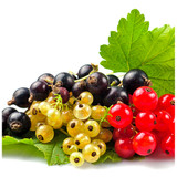 3 Mixed Large Currants - White, Red & Blackcurrant Plants in 2 Pots, Tasty Fruit