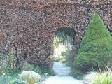 20 Green Beech Hedging Plants 120-150 cm,Copper Autumn Colour 4-5ft Trees