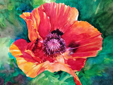 """Poppy  11"""" x 14"""" original watercolor by Karen Vernon  Watercolor on Ampersand archival museum quality Aquabord  The image depicts a single red poppy in full bloom against a vibrant green background."""