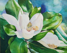 """Summer's Lumina  Original watercolorl painting by Karen Vernon  11"""" x 14""""  picture image framed in a plein air frame frame  17"""" x 20"""" framed  Original watercolor painting by Karen Vernon on Ampersand's archival Aquabord   The original oil painting depicts a magnolia bloom."""