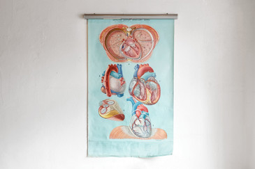 SOLD - Vintage Anatomy Pull Down Chart, Heart,  1960's