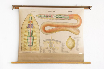 SOLD - Vintage Earthworms Pull Down Diagram, 1960s Swedish