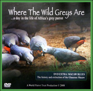 Cover of the book: DVD - Where the Wild Greys Are