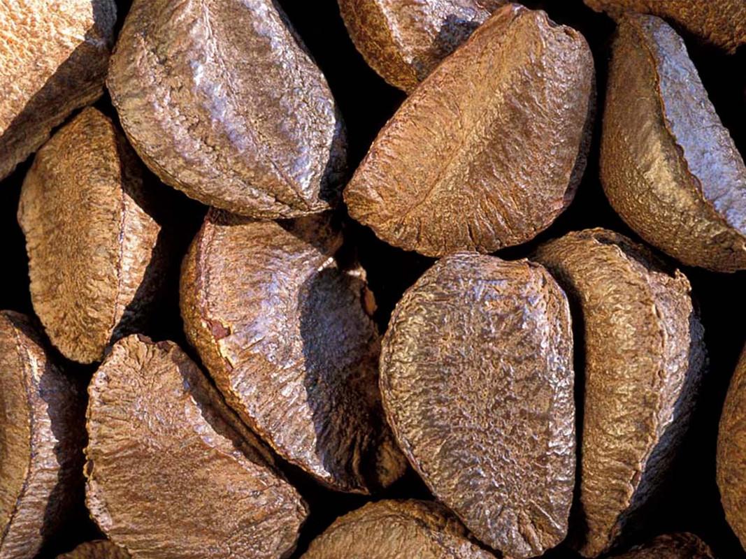 Brazil Nuts in Shell