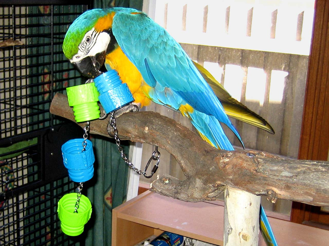 Macaw with Turn'n Learn Logs foraging toy