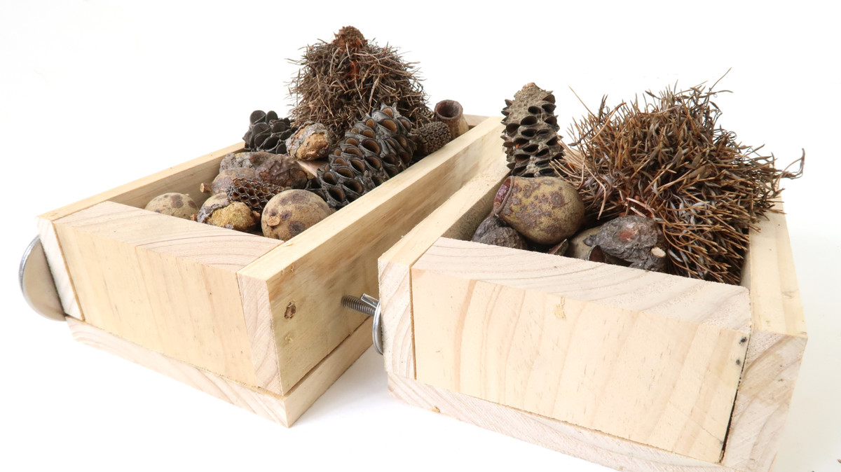 Small and Large Forage Trays with Australian Nuts and Pods