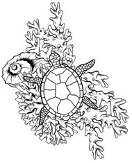 Coral Seaturtle