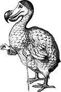 The Dodo - AIW