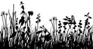 Wildflower Silhouettes