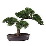 Nearly Natural 16 inch; Cedar Bonsai Plant With Pot