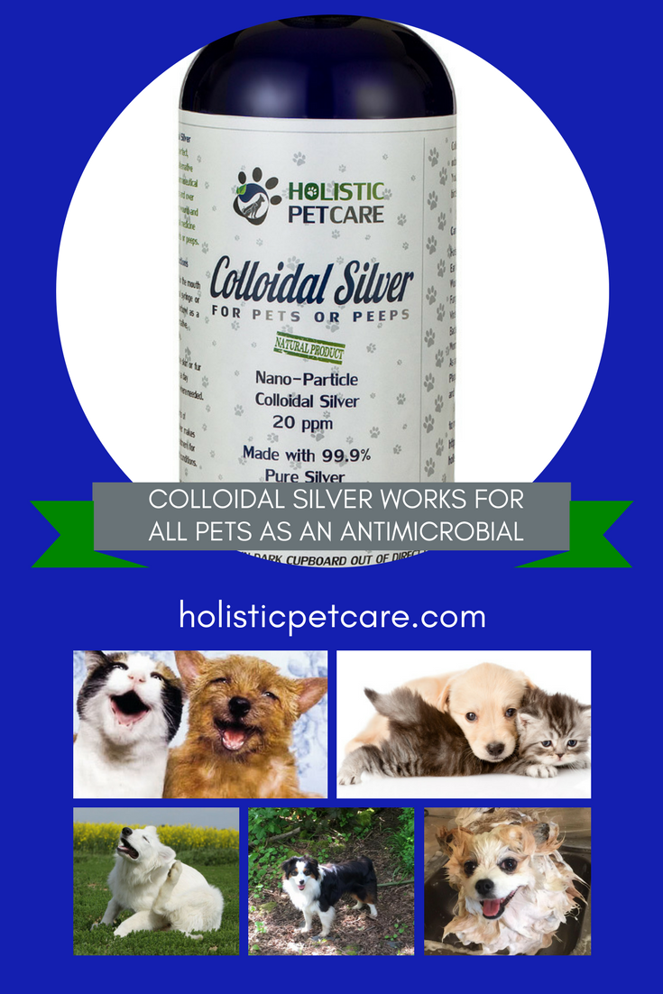 collodialsilverforpets-1-.png