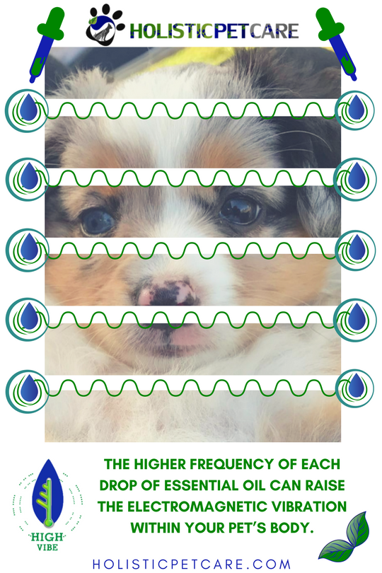 higher-frequency-of-essential-oils-1-.png