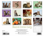 Just Maine Coon Cats Calendar 2015