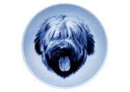Briard Face Danish Blue Dog Plate
