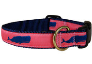 Whale Dog Collar on Coral