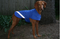 Blue Dog Coat