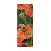 Orange Poppies Banner