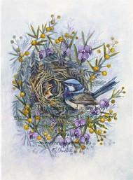 Blue Fairy Wren & Wattle