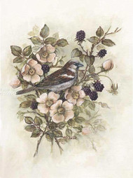 Sparrow, Blackberry & Wild Rose