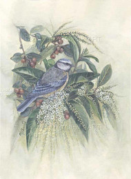 Blue Tit , Fiddlewood & Berries