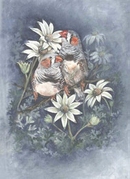 Finches & Flannel Flowers