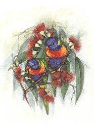 Rainbow Lorikeets & Gums