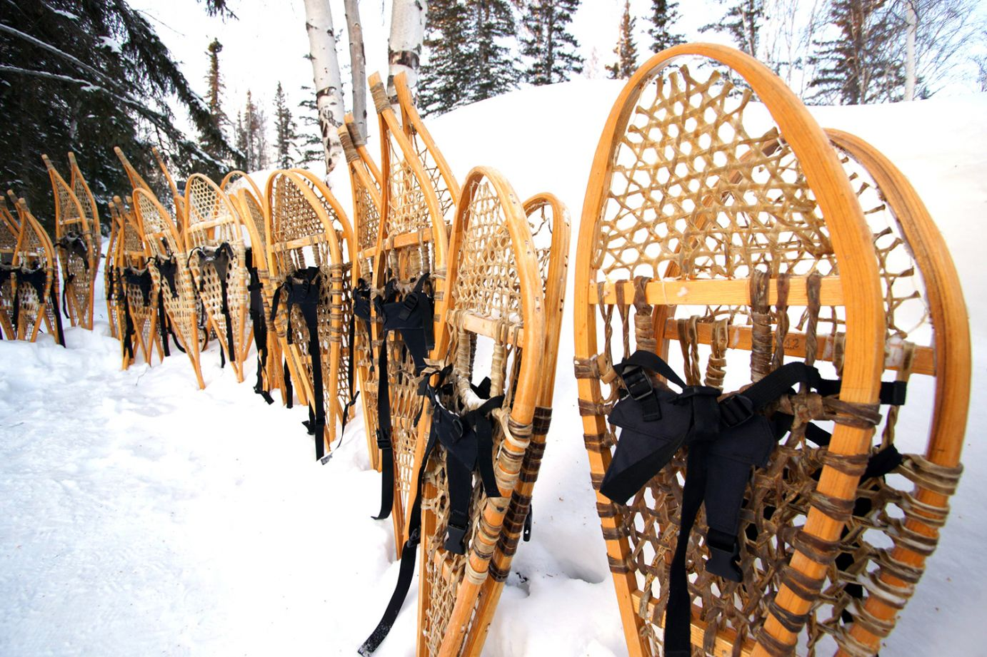 snowshoes-image.jpg