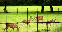 Deer fence fencing netting 165'