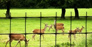 Deer fence fencing netting 165'