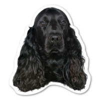 (Black) Cocker Spaniel  Magnet