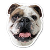 Are you a dog-lover? Do you have a bulldog?
