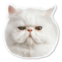 (White) Persian Cat Magnet