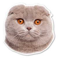 Scottish Fold Cat Magnet