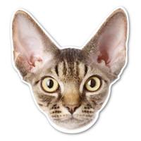 Devonshire Rex Cat Magnet