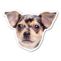 (Dapple) Chihuahua Magnet