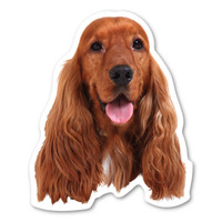 English Cocker Spaniel  Magnet