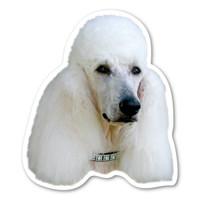 Poodle Magnet