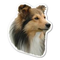 Shetland Sheepdog Magnet