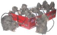 Rat Mini Single Assorted