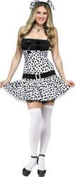 Dalmatian  Adult 10-14
