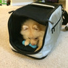 Sleepypod Air Silver Airline Approved Pet Carrier has a soft, cozy interior with lots of mesh ventilation - Lily loves it!