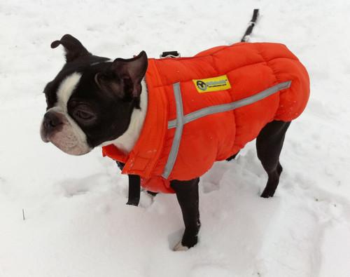 International Orange Chillybuddy winter dog jacket