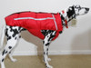 Custom Chillybuddy winter dog jacket made for a Dalmatian in Red